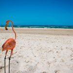 ウェリントンで電動スクーター『Flamingo』に乗ってみたよ!